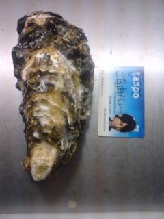 おっきい牡蠣
